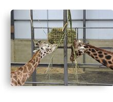 It Takes Two: Tall With Twigs Canvas Print