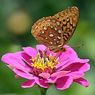 Great Spangled Fritillary by BigD