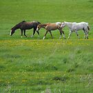 3 Appy's In A Row by Tracy Faught