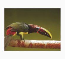 green aracari toucan Kids Clothes