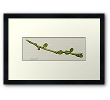 Twig Study in Watercolour Framed Print