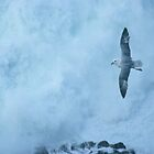 On the wing of a gull by Jtucker