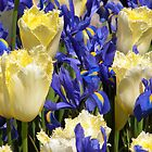 Tulips and Irises by RavenFalls