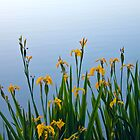 Irises by the Lake by RavenFalls