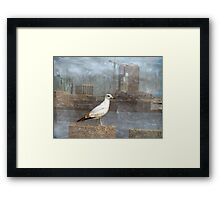 A Seagull Pose Framed Print