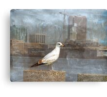A Seagull Pose Canvas Print