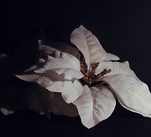 contrast flowers by theblankkcanvas