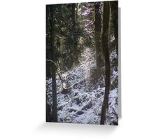 Forest Sun Rays in the Snow #24 Greeting Card