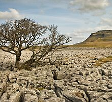 Ingleborough from White Scar by Steve  Liptrot