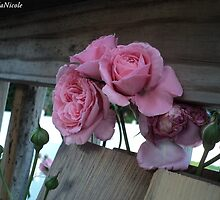 pink roses  by theblankkcanvas