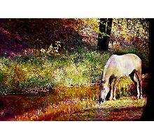 Spotted Horse in Spring Photographic Print