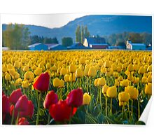 Tulip Fields at Dawn Poster