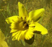 Sunny Gold by digitalmidge