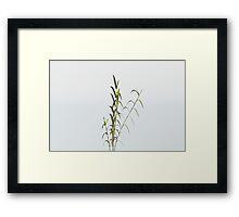 Bamboo Planat Framed Print