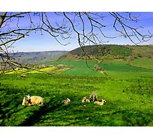 English Springtime Photographic Print