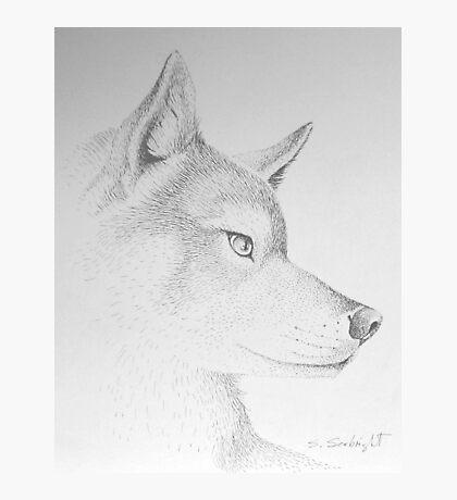 Wolf's Head Photographic Print