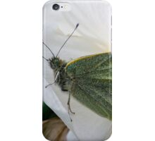 butterfly on a double daffodil iPhone Case/Skin