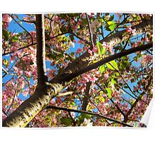 Up A Cherry Tree Poster