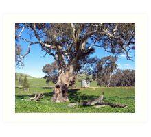 Farm tree Art Print