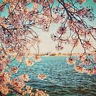 Spring in DC by Kadwell