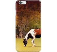 The Princely Pinto iPhone Case/Skin