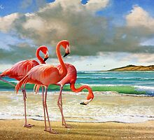 flamingo beach by R Christopher  Vest