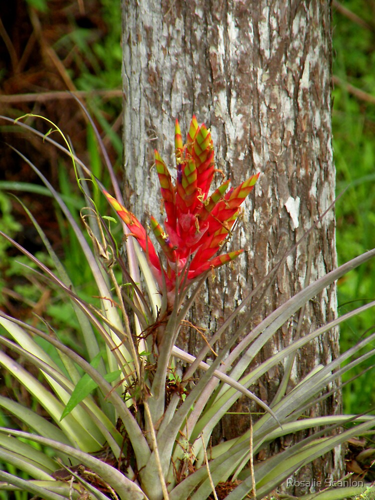 Quill Leaf by Rosalie Scanlon