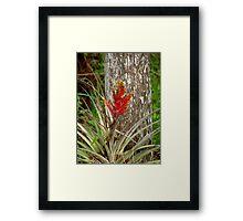 Quill Leaf Framed Print