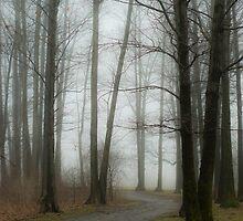 foggy forest by fallsguy