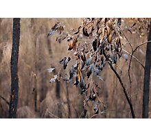 Burnt Bush Photographic Print