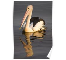Reflected Pelican Poster