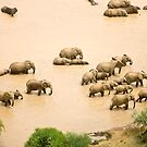 Elephants at a waterhole by David Clarke