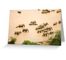 Elephants at a waterhole Greeting Card