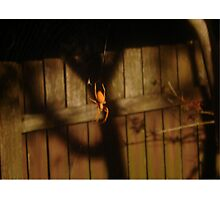Spidery Web & Fence Photographic Print