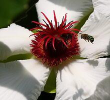 Honey Bee in Green by chrispua