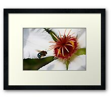 Bumble Bee in Blue - Featured Framed Print