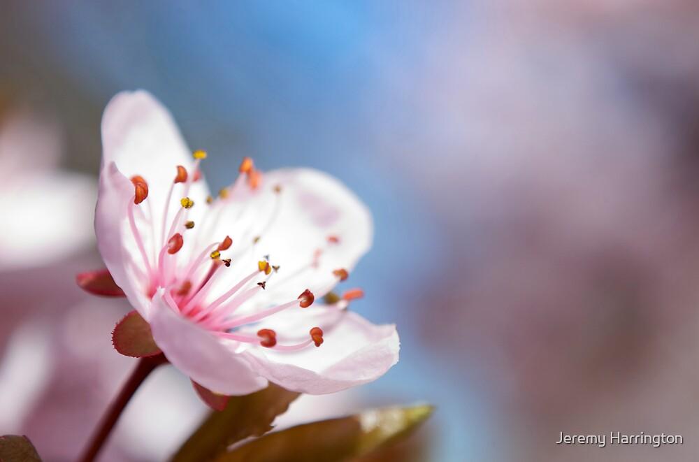 A Reminder Of Spring by Jeremy Harrington