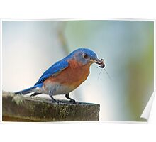 Mr. Bluebird contends with cricket and clicker Poster