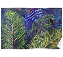 Cycad in the breeze Poster