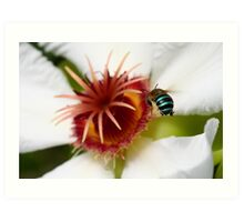 Incoming Bumble Bee - Featured Art Print