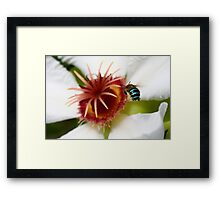 Incoming Bumble Bee - Featured Framed Print