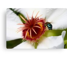 Incoming Bumble Bee - Featured Canvas Print