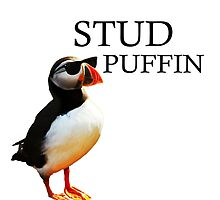 Stud Puffin by paytnart