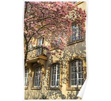magnolia and old tenement in Mannheim Poster