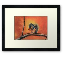 Little Red Squirrel  Framed Print