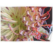 Unique florals Poster