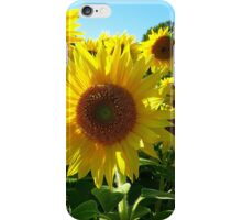 Sunflower Trio iPhone Case/Skin