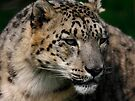 Snow Leopard by SWEEPER