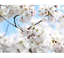 And the Spring comes slowly up this way. Photographic Print