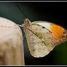 Butterfly at Chester Zoo by Shaun Whiteman